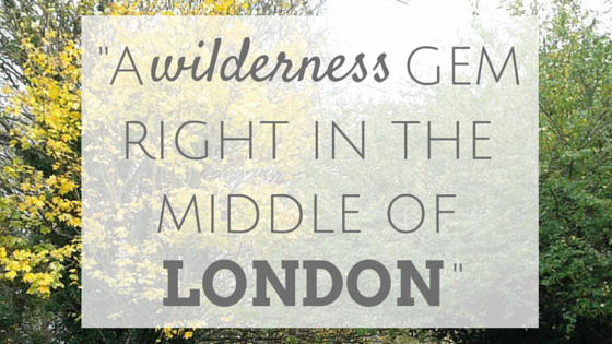 a wilderness gem right in the middle of London Parkland Walk
